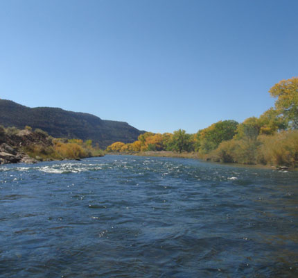 Lower San Juan River Brown Trout